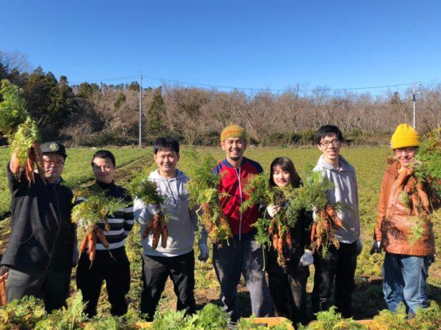 にんじん収穫研修